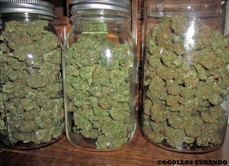 Como Plantar Marihuana Soy Un Yonki
