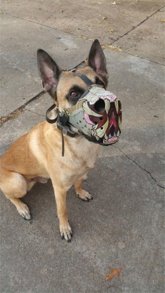 soy un yonki perro del mal 09